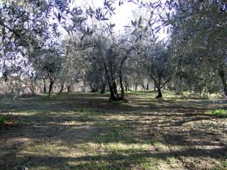Foto - Terreno agricolo in Vendita a Vignanello