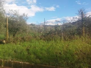 Foto - Terreno agricolo in Vendita a Calenzano