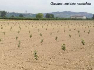 Foto - Terreno agricolo in Vendita a Borgo d'Ale