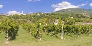 Foto - Terreno agricolo in Vendita a Assisi
