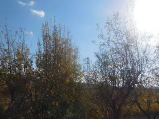 Foto - Terreno agricolo in Vendita a Belvedere Ostrense