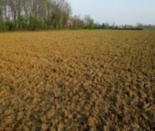 Foto - Terreno agricolo in Vendita a Mesola