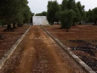 Foto - Terreno agricolo in Vendita a Ostuni