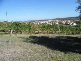 Foto - Terreno agricolo in Vendita a Civitanova Marche