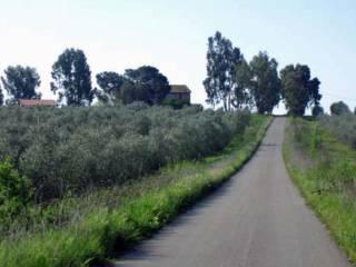 Foto - Terreno agricolo in Vendita a Follonica