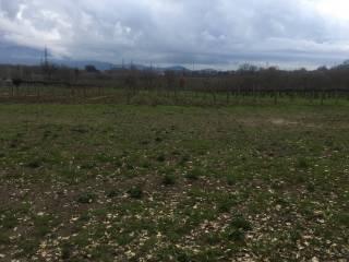 Foto - Terreno agricolo in Vendita a Caianello