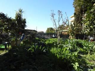 Foto - Terreno agricolo in Affitto a Civitavecchia