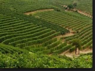 Foto - Terreno agricolo in Vendita a Trezzo Tinella