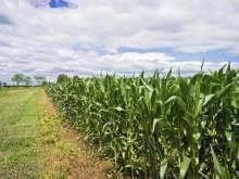 Foto - Terreno agricolo in Vendita a Candia Canavese
