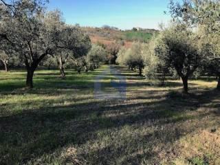 Foto - Terreno agricolo in Vendita a Villalfonsina