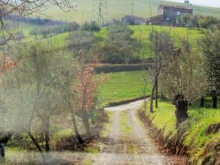 Foto - Terreno agricolo in Vendita a Picciano