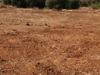 Foto - Terreno agricolo in Vendita a Trapani