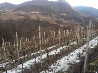 Foto - Terreno agricolo in Vendita a Albiano