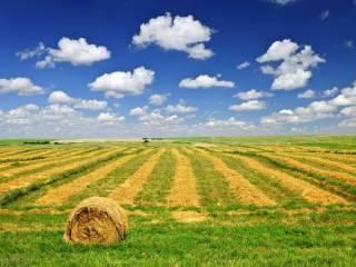 Foto - Terreno agricolo in Vendita a Palazzolo sull'Oglio
