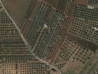 Foto - Terreno agricolo in Vendita a Lamezia Terme