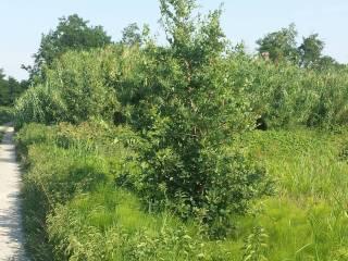 Foto - Terreno agricolo in Vendita a Bentivoglio