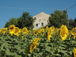 Foto - Rustico / Casale 370 mq, Massignano