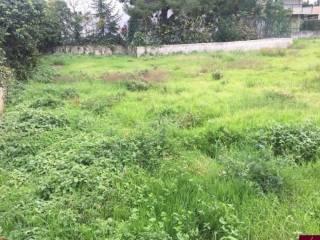 Foto - Terreno agricolo in Affitto a Bagheria