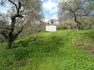 Foto - Terreno agricolo in Vendita a Bracciano