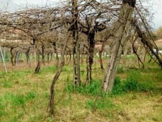 Foto - Terreno agricolo in Vendita a Monte Compatri