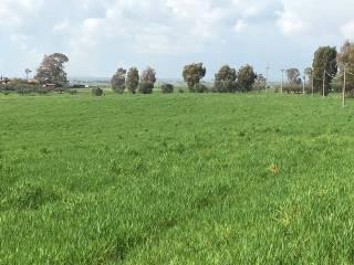 Foto - Terreno agricolo in Vendita a Fiumicino