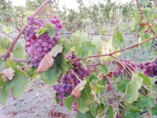 Foto - Terreno agricolo in Vendita a Sorso