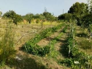 Foto - Terreno agricolo in Vendita a Quartucciu