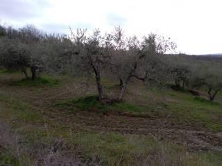 Foto - Terreno agricolo in Vendita a Paciano