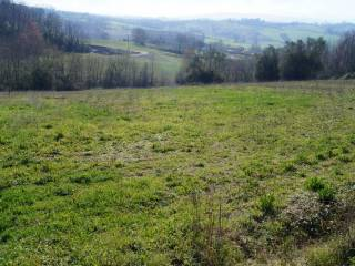 Foto - Terreno agricolo in Vendita a Alvignano