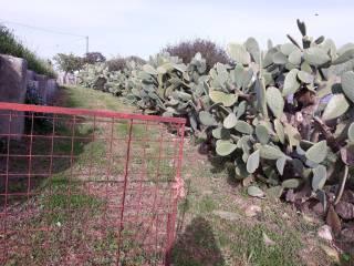 Foto - Terreno agricolo in Vendita a Berchidda