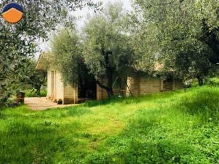 Foto - Rustico / Casale via SP22b, 7, Vigna Grande, Montelibretti