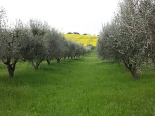 Foto - Terreno agricolo in Vendita a Nereto