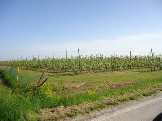 Foto - Terreno agricolo in Vendita a San Prospero