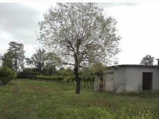 Foto - Terreno agricolo in Vendita a Castenedolo