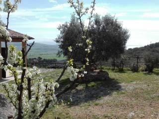 Foto - Terreno agricolo in Vendita a Orbetello