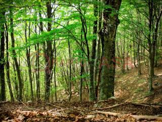 Foto - Terreno agricolo in Vendita a Valdagno