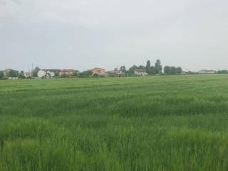 Foto - Terreno agricolo in Vendita a Rovigo