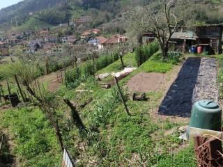 Foto - Terreno agricolo in Vendita a Carrara
