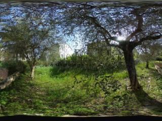 Foto - Terreno agricolo in Vendita a Monsano