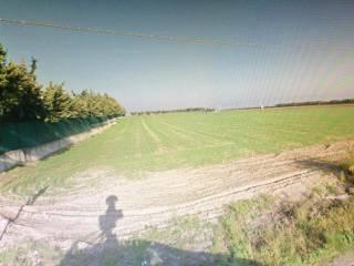 Foto - Terreno agricolo in Vendita a Foggia