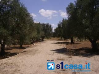 Foto - Terreno agricolo in Vendita a Sannicola