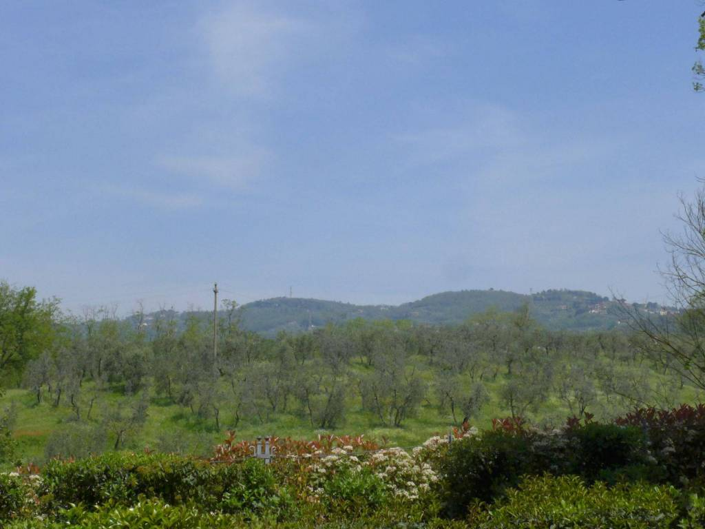 foto  Terreno agricolo in Vendita a Lamporecchio