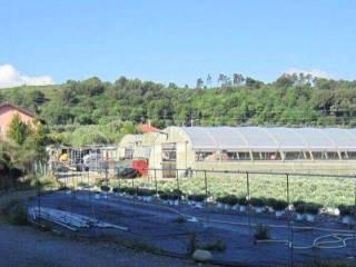 Foto - Terreno agricolo in Vendita a Albenga