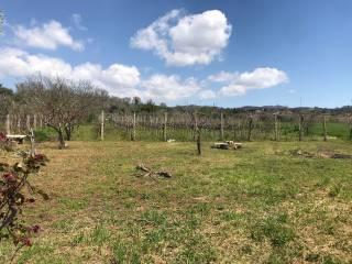 Foto - Terreno agricolo in Vendita a Lanuvio