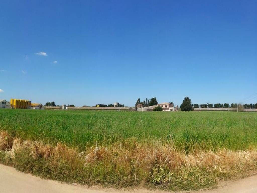 foto  Azienda agricola in Vendita a Salice Salentino
