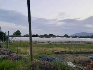 Foto - Terreno agricolo in Vendita a Fondi