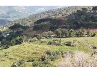 Foto - Terreno agricolo in Vendita a Gratteri