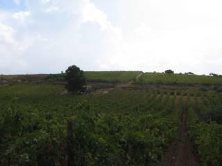 Foto - Terreno agricolo in Vendita a Montevago