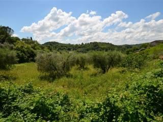 Foto - Terreno agricolo in Vendita a Ponzano Romano