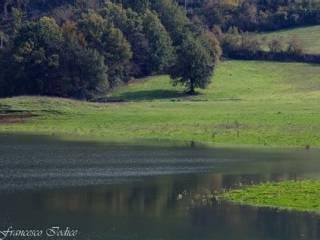 Foto - Terreno agricolo in Vendita a Trivigliano